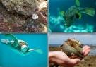 Okinawa Sea Collage 1