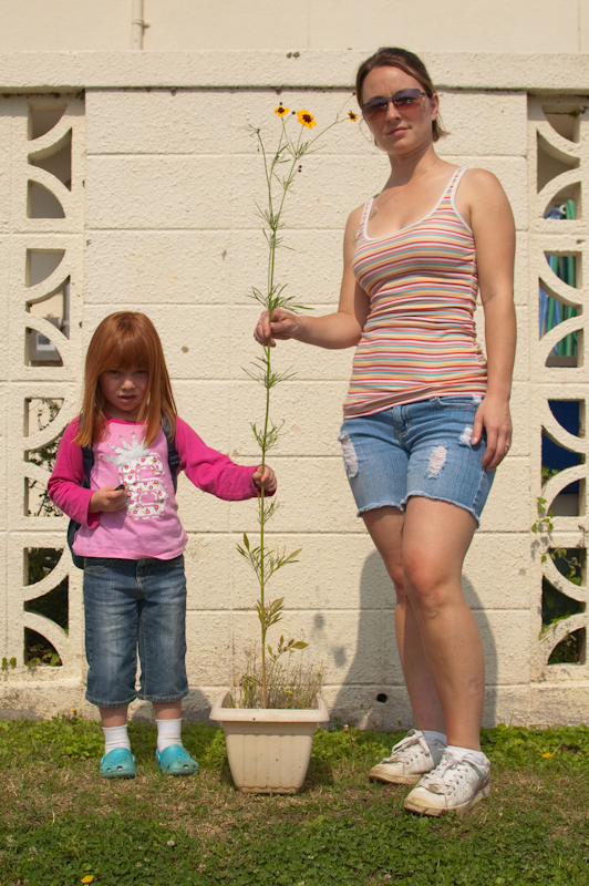 5 ft tall Coreopsis (w/Me and daughter)