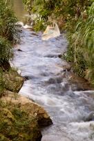 Chibana Creek 2013©J.Martinez