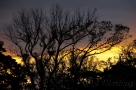 Sebille_Manor_Sunrise-3