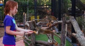 Capybara-Monkey-45_1