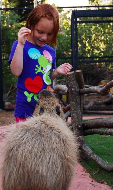 Capybara-Monkey-53_1