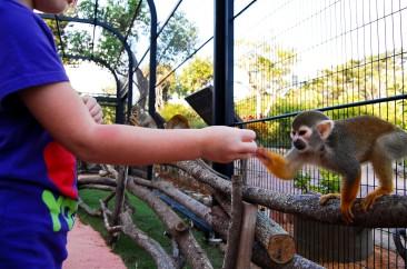 Capybara-Monkey-71_1