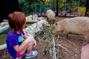 Capybara-Monkey-96_1
