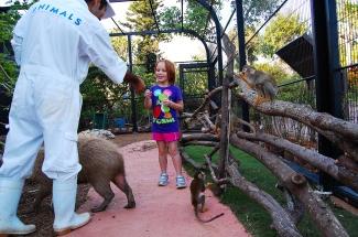 Capybara_Monkey-57